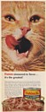 1967 Orange Tabby Cat Friskies Liver & Chicken Cat Food Print Ad