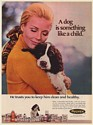 1971 A Dog is Something Like a Child Pulvex Pet Care Products Print Ad
